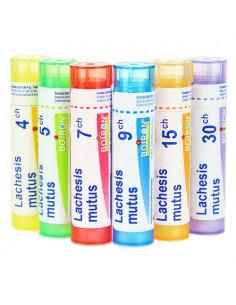 Lachesis Mutus Tube Granules Boiron. 4G