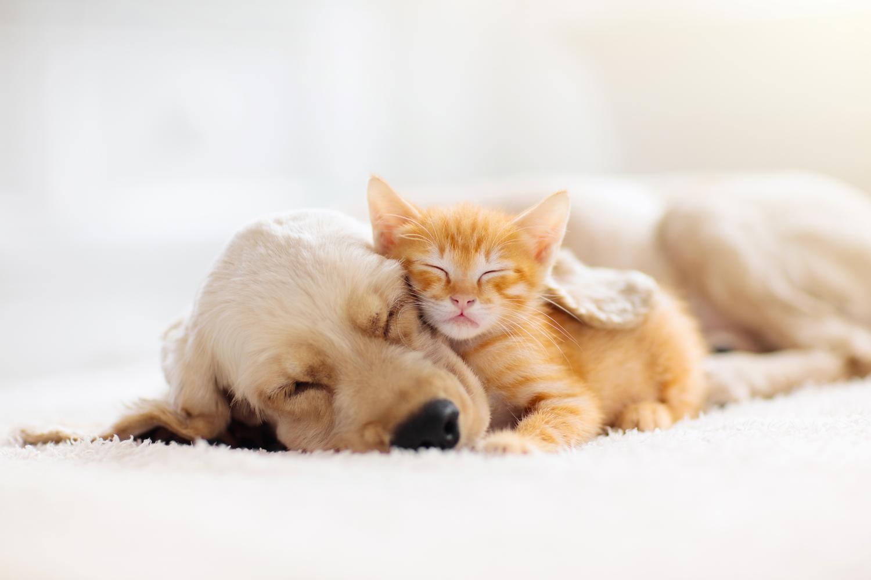 vétérinaire soin chien chat parapharmacie